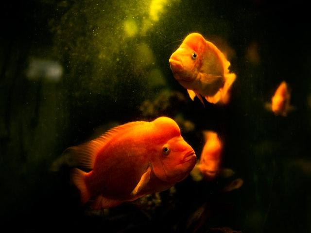A Freshwater Aquarium Guide